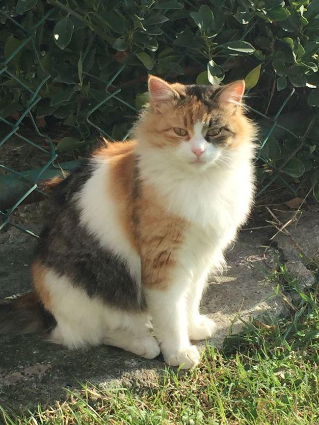Yeşilköy Kedileri❤️ Hello World Animals Cats Enjoying Life Beatiful Istanbul Yesilköy Istanbulove Pictureoftheday Photography