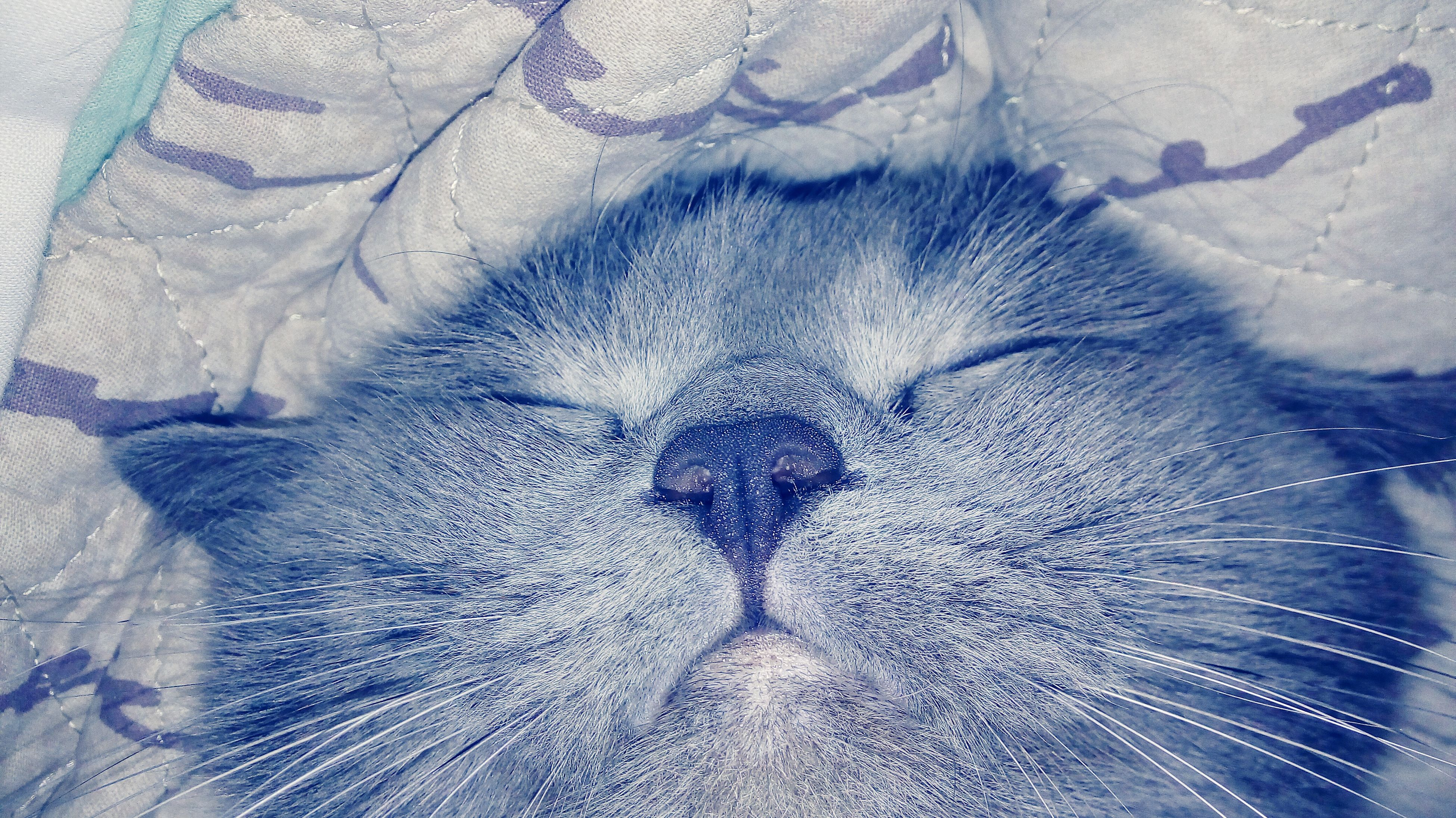animal themes, one animal, domestic animals, mammal, pets, close-up, high angle view, domestic cat, whisker, wildlife, sleeping, animals in the wild, animal body part, cat, zoology, relaxation, no people, feline, animal head, nature