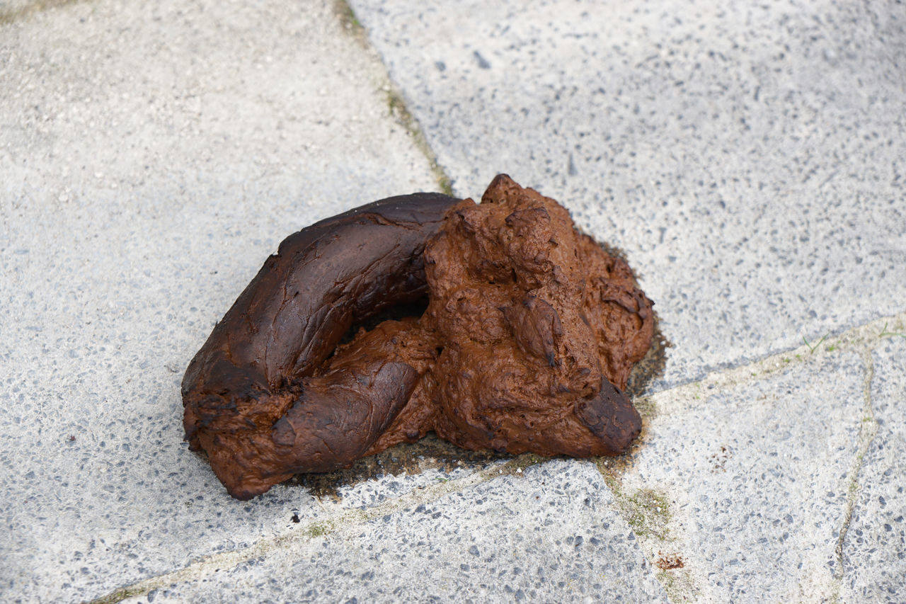 Close-up Dirty Dog Dirt Dog Poo Dog Poop Dog Shit Dog Turd Footpath Ground No People Pavement Pile Of Shit Shit! Sidewalk Street Turd