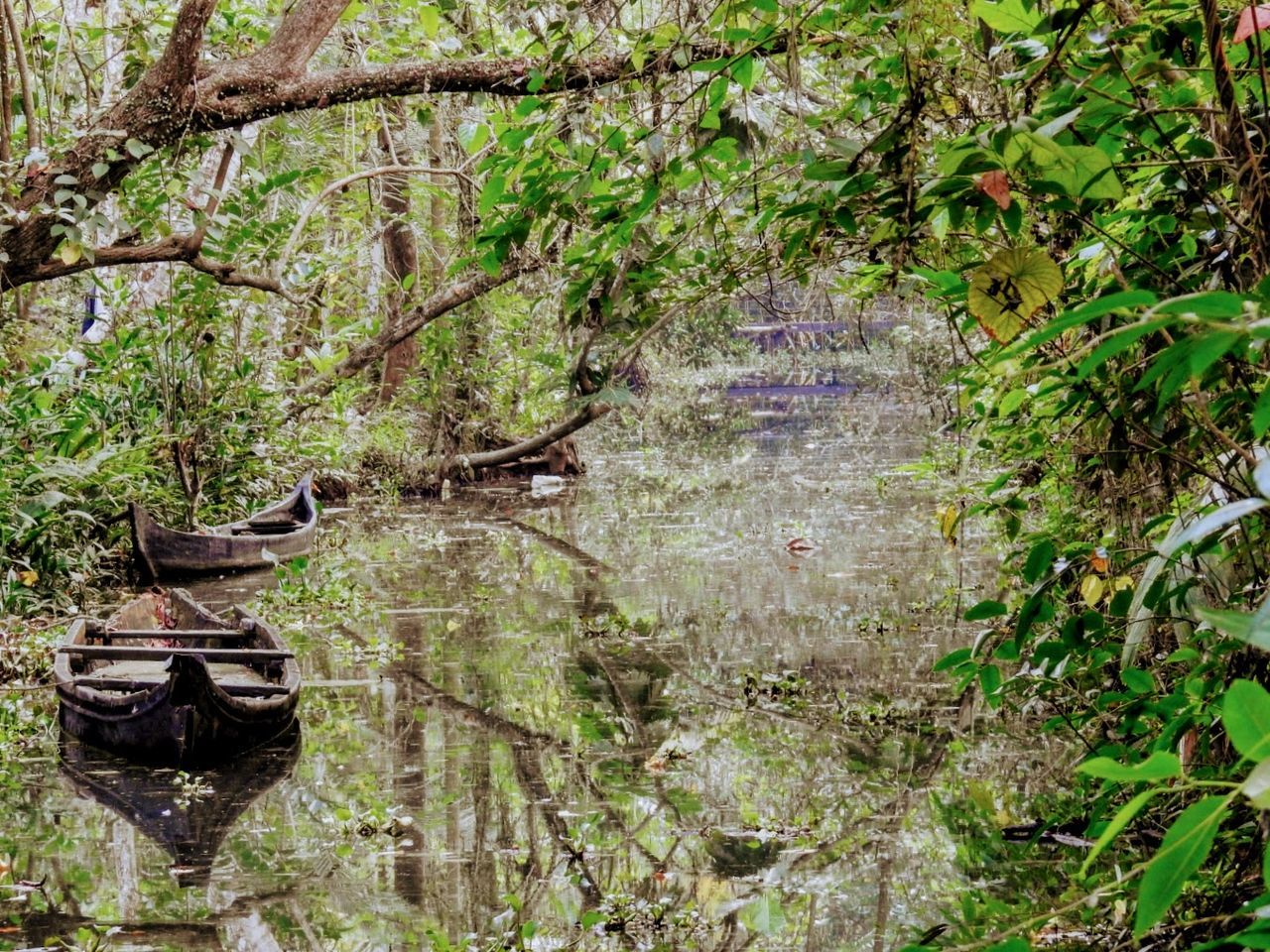 Boats in a a site moving stream at the Kumarakom Bird Sanctuary Nature Outdoors Tree Tranquility Tranquil Scene No People Growth Plant Day Water Kumarakom Bird Sanctuary Kerala India Boats Stream