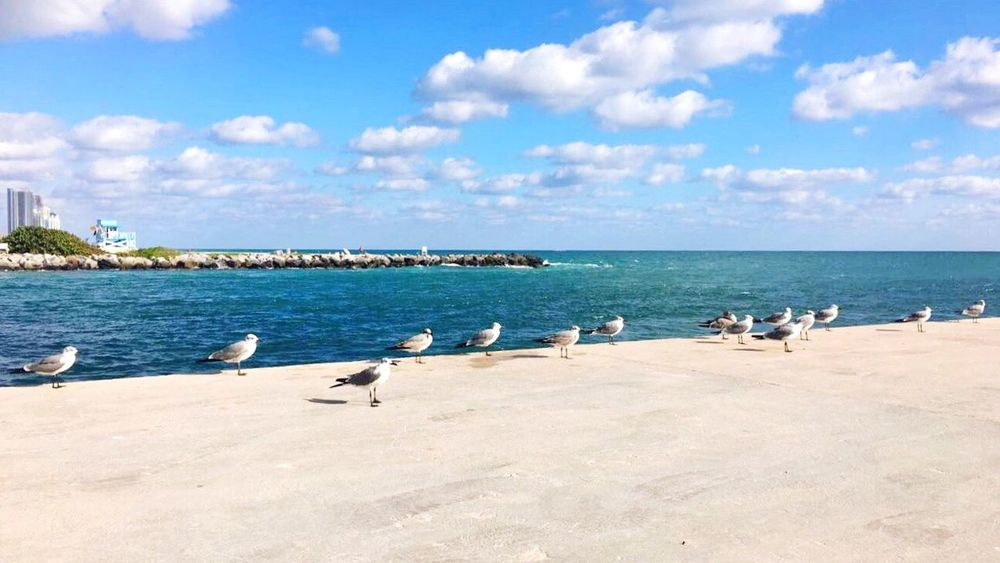 Adapted To The City Sea Sky Bird Water Horizon Over Water Nature Beauty In Nature Scenics Outdoors Day Cloud - Sky Beach Beach Life Ocean