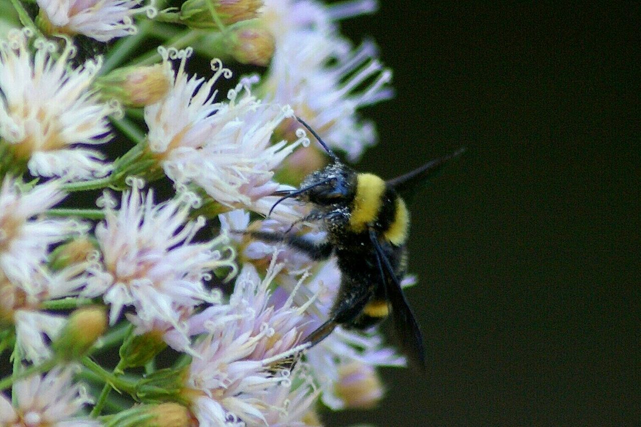 Beautiful stock photos of bee, Animal Themes, Animals In The Wild, Backgrounds, Beauty In Nature