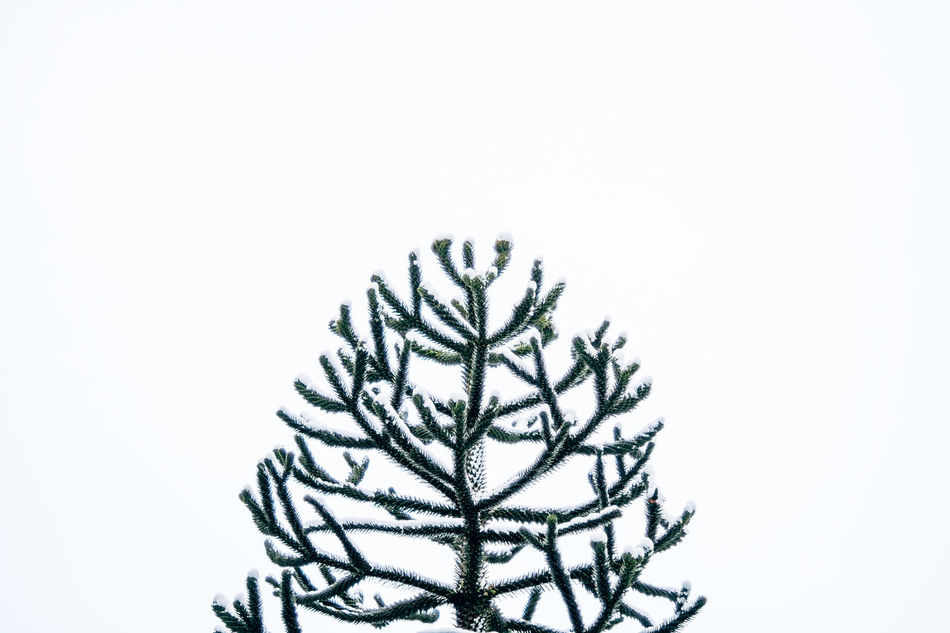 Beautiful stock photos of winter,  Copy Space,  Cut Out,  Germany,  Green Color