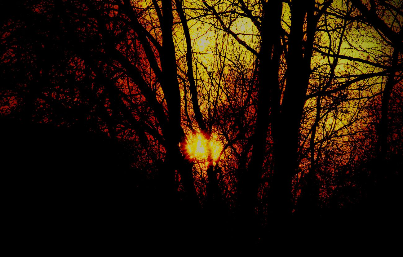 Sunsetlovers Sunset✨trees✨ EyeEm Nature Lover Silhouette Branch Tree Low Angle View Bare Tree Scenics Back Lit Glowing Nature Tranquility Outdoors Majestic Beauty In Nature WoodLand Tranquil Scene Sky Vibrant Color Non-urban Scene Bright Outline