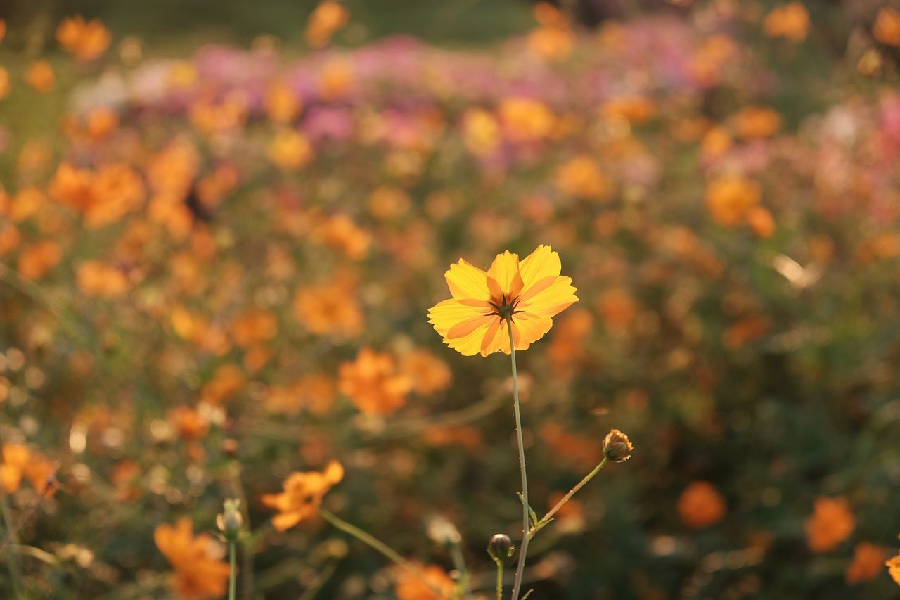 Beauty In Nature Blooming Close-up Day Field Flower Flower Head Focus On Foreground Fragility Freshness Growth Nature No People Outdoors Petal Plant Pollen