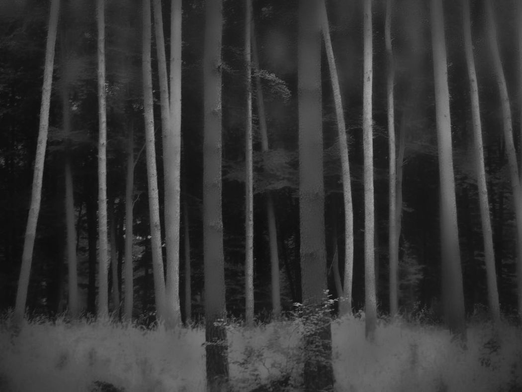 Why Trees don't say anything??? Gorzów Wielkopolski Poland Trees