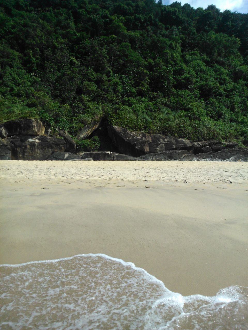 nature, no people, tree, sand, tranquility, tranquil scene, beauty in nature, water, day, outdoors, scenics, beach, sky