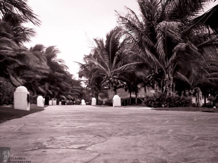 Vacation...... LGarciaPhotography Iphone 6 Plus Monochrome Monochromatic Playadelcarmen Cancun Mexico Vacation Black And White Photography Blackandwhite Nature_collection Architecture Monochrome _ Collection Black And White EyeEm Best Shots EyeEm Nature Lover Eye4photography  EyeEm Best Shots - Black + White EyeEm Gallery EyeEm Best Shots - Nature Eyem Best Shots EyeEm Best Shots - Landscape Eye4black&white  EyeEm Masterclass Aukey 3 In 1 Lens
