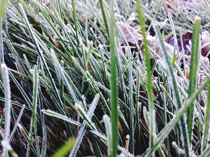 - Frost on the grass - First Eyeem Photo