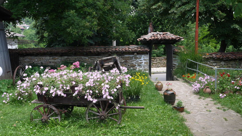 Patio Flower Freshness Tree Plant Green Color Fragility Park - Man Made Space Nature Beauty In Nature Blossom In Bloom Botany Garden Springtime Outdoors Flowers Cart Wagon  The Great Outdoors - 2017 EyeEm Awards