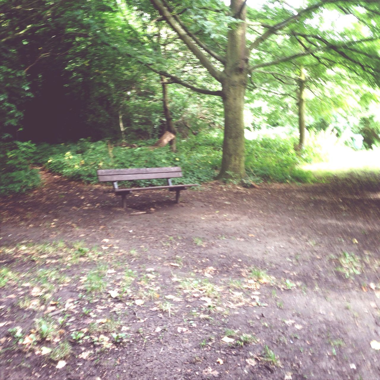 tree, nature, growth, no people, tranquility, day, beauty in nature, park - man made space, landscape, outdoors
