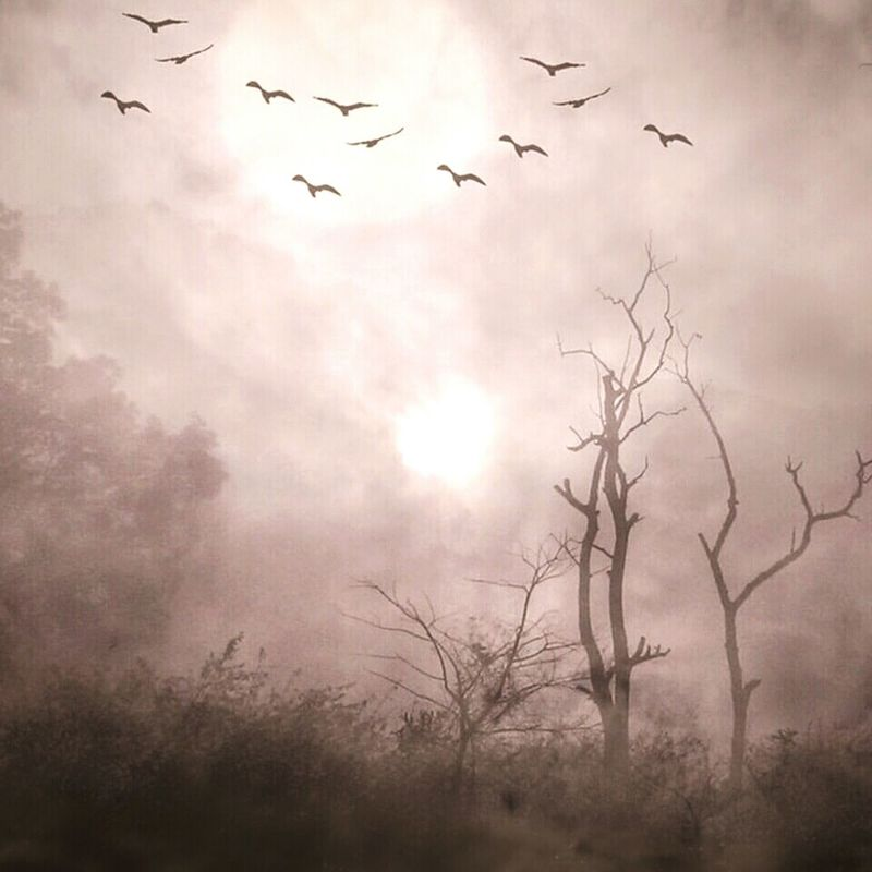 Getting Creative Blended Images Artistic Photo Birds Serene Outdoors Fall Morning