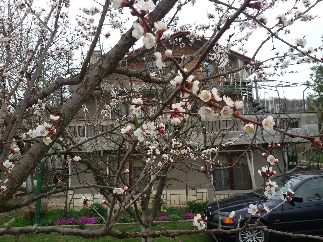 tree, flower, branch, blossom, building exterior, architecture, growth, springtime, outdoors, transportation, built structure, city, no people, land vehicle, day, fragility, nature, beauty in nature, sky, freshness