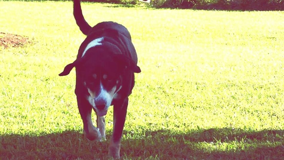 Dogs Dog Stormy Girl I Love My Dogs❤️ I Love My Dog This is Stormy Girl.
