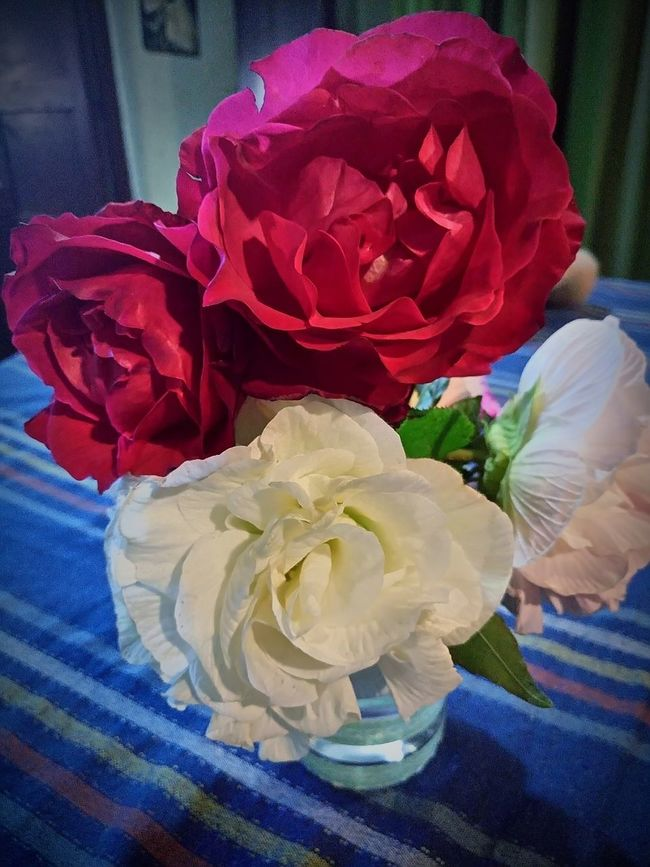 Hermosas 😳 Rosas Hermosas Roses Colores Colors Flowers Flowerporn Beutiful  Beutiful Nature Rosa Flowers,Plants & Garden Flowers, Nature And Beauty Beuty Beutyflowers