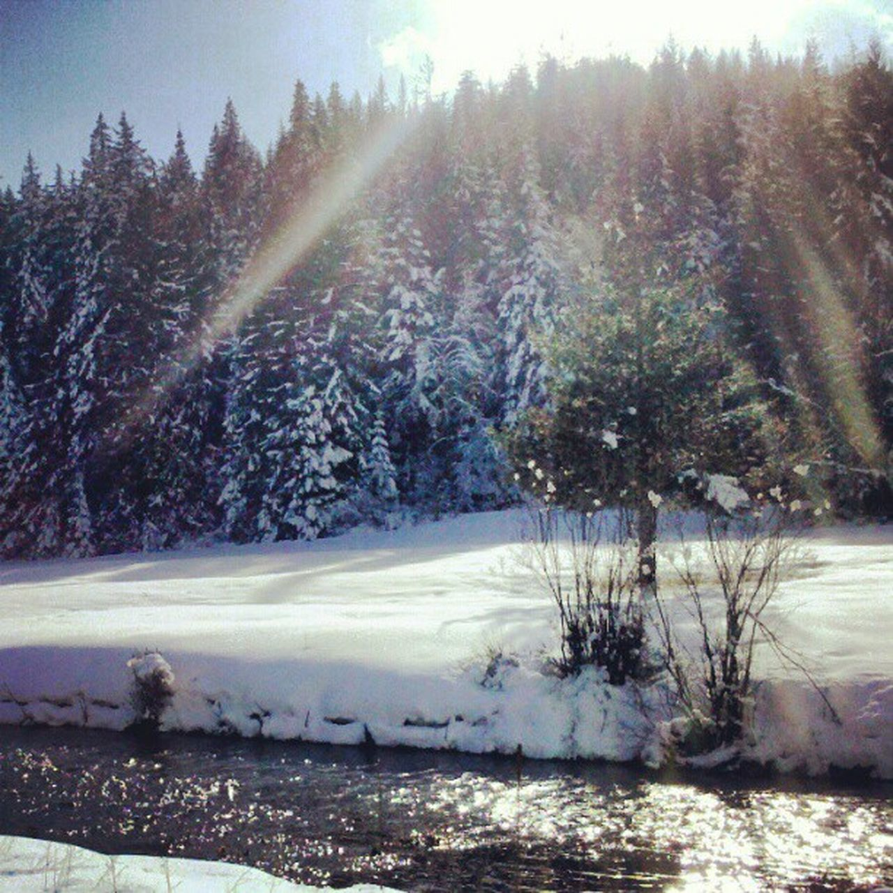 nature, winter, cold temperature, tranquility, tree, tranquil scene, cold, beauty in nature, snow, water, no people, outdoors, scenics, sunlight, day, frozen, landscape, sky