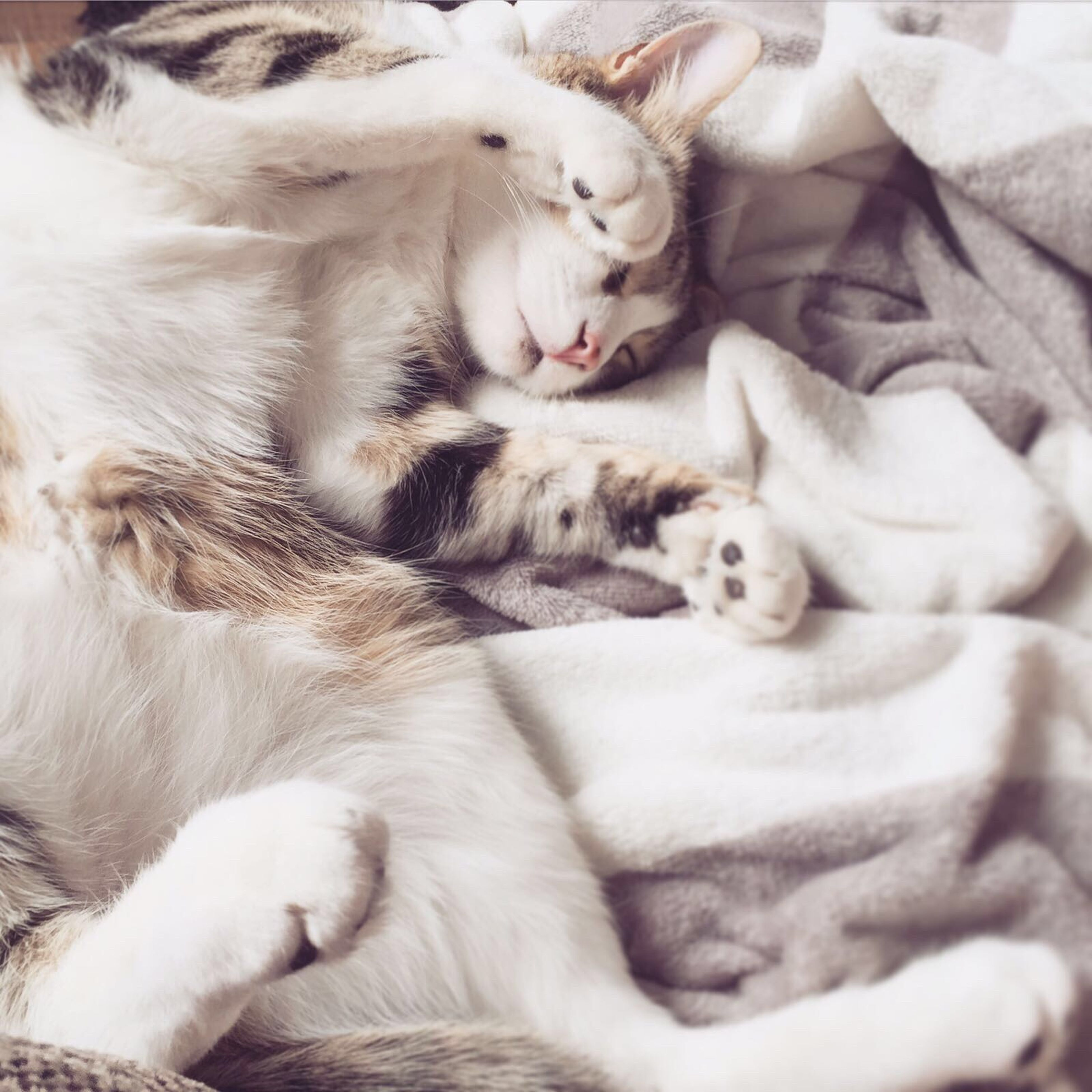 domestic animals, pets, domestic cat, mammal, animal themes, relaxation, lying down, sleeping, feline, no people, togetherness, cat, close-up, indoors, day