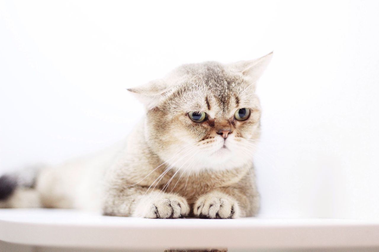 Why so serius ? First Eyeem Photo Cat Lovers Vscocam