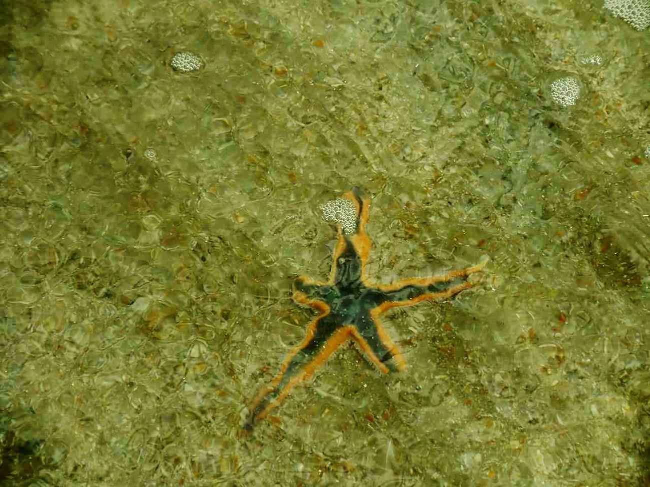 Nature Sea Life Starfish At Beach Underwater