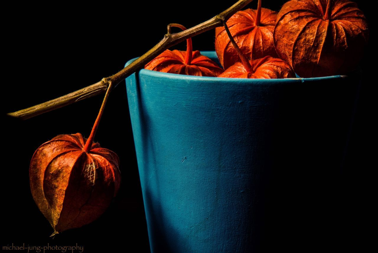 Physalis. Today I spend few hours in my Photostudio. Red Autumn Studio Shot Dark Wrapped Box - Container No People Christmas Food Gift Close-up Freshness Physalis Fruit Physalis Studiophotography Shadows & Lights