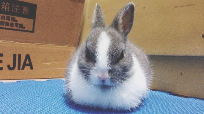 相依為命 Rabbit Cute Pets Cute Sleeping Bunny  Minimalism Taking Photos Enjoying Life