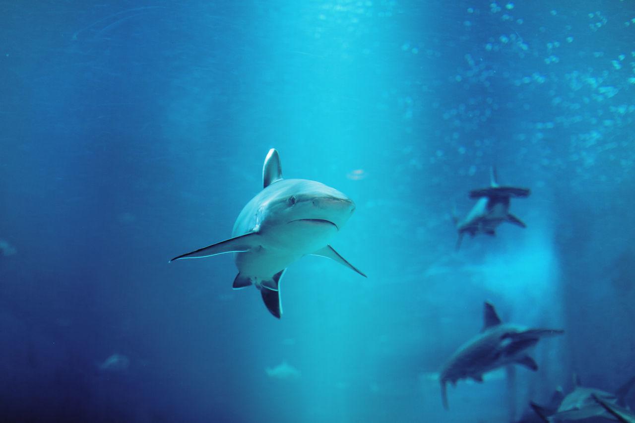 Beautiful stock photos of underwater,  Animal Themes,  Animal Wildlife,  Beauty In Nature,  Blue