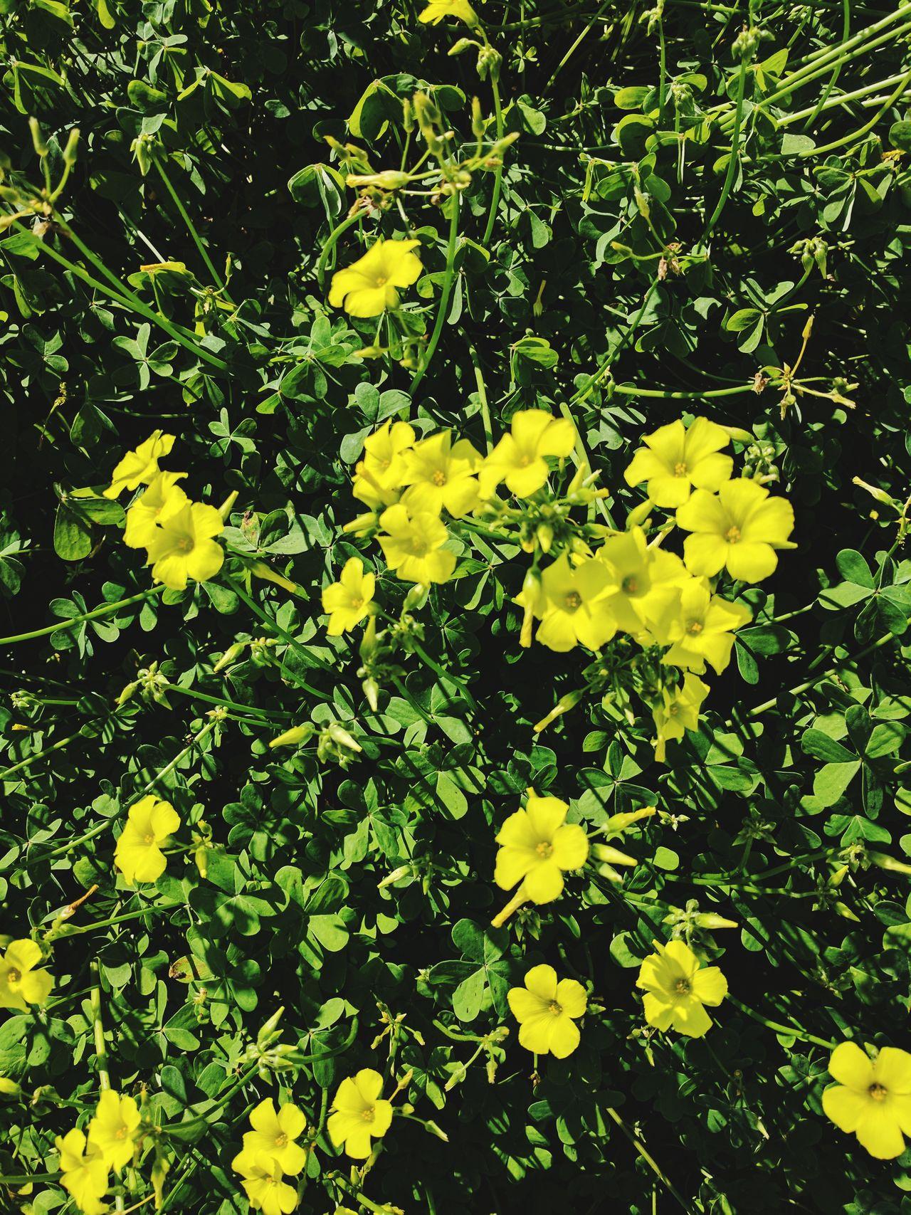 Botany EyeEmFlower EyeEm Nature Lover Botanical Flowerporn First Eyeem Photo Flower Head