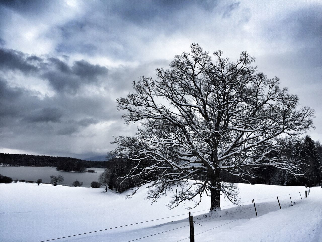 snow, winter, cold temperature, weather, tranquility, beauty in nature, nature, tranquil scene, tree, bare tree, scenics, landscape, sky, day, outdoors, no people, cloud - sky, branch
