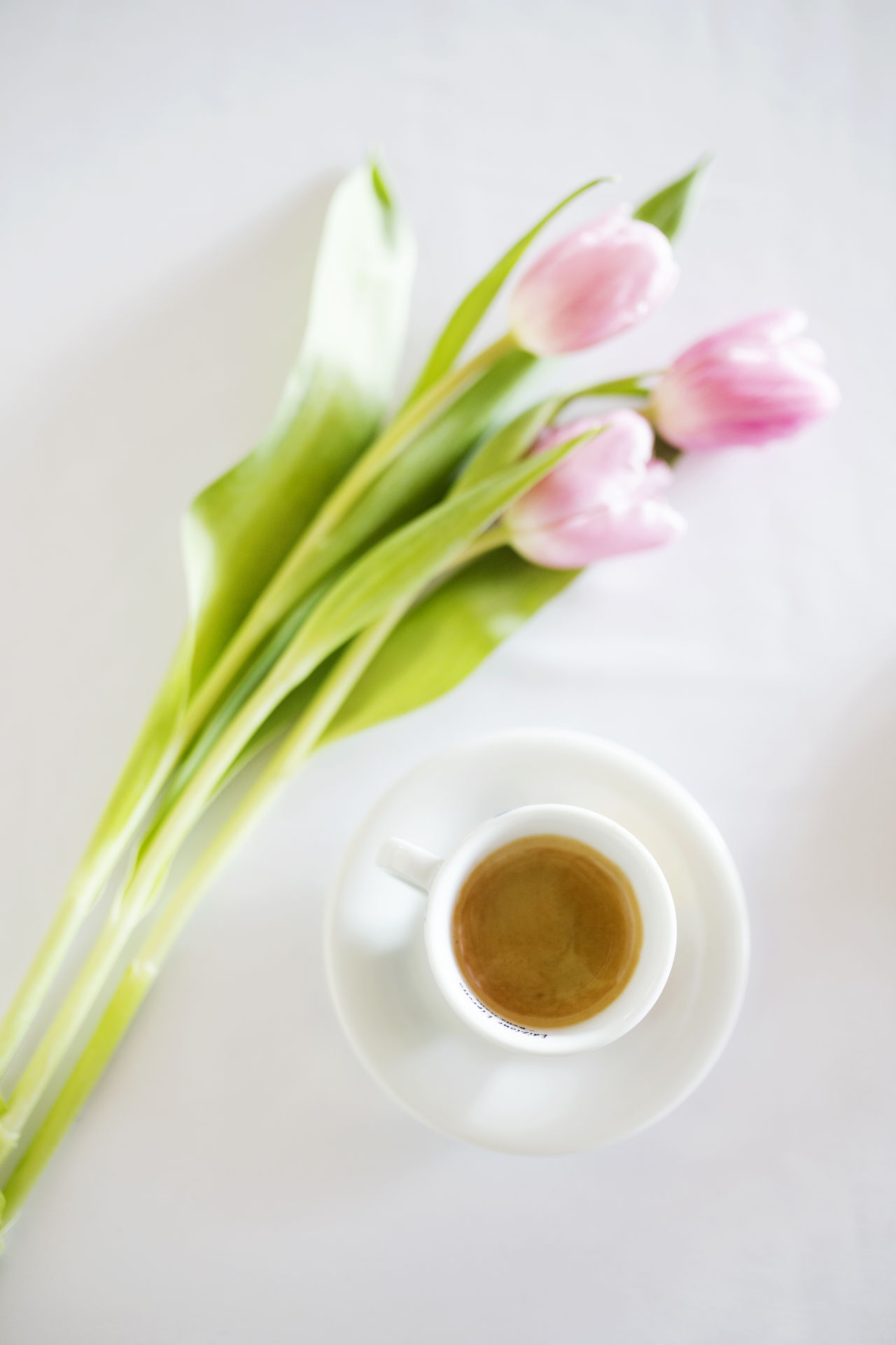 Beauty Bouquet Coffee Espresso Flower Indoors  Nature Plant Tulip White Color