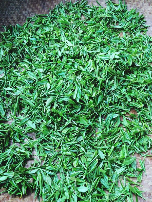 Fresh LongJing Tea Hello World Look Into The Future  Taking Photos Hello World Enjoying Life holiday