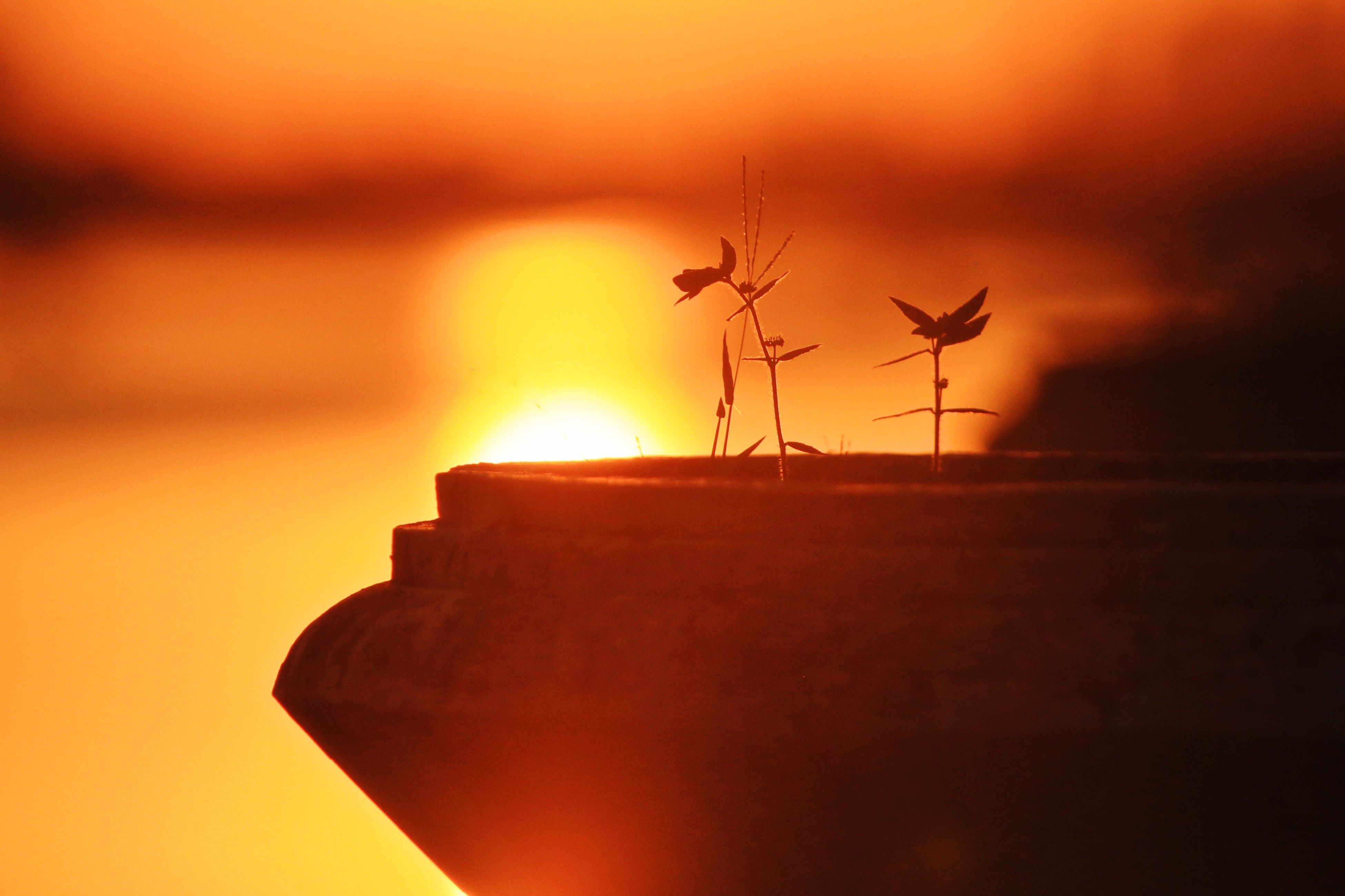 sunset, orange color, silhouette, sun, focus on foreground, sky, nature, tranquility, tranquil scene, beauty in nature, scenics, no people, outdoors, sunlight, close-up, dusk, idyllic, dramatic sky, cloud - sky, selective focus
