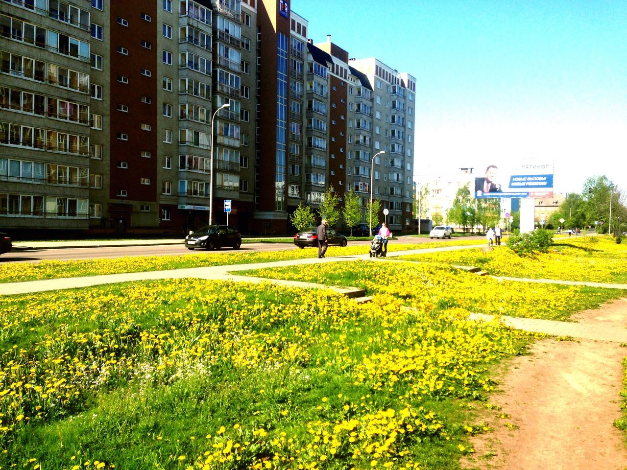 architecture, building exterior, built structure, grass, day, city, outdoors, sunlight, growth, real people, clear sky, nature, tree, flower
