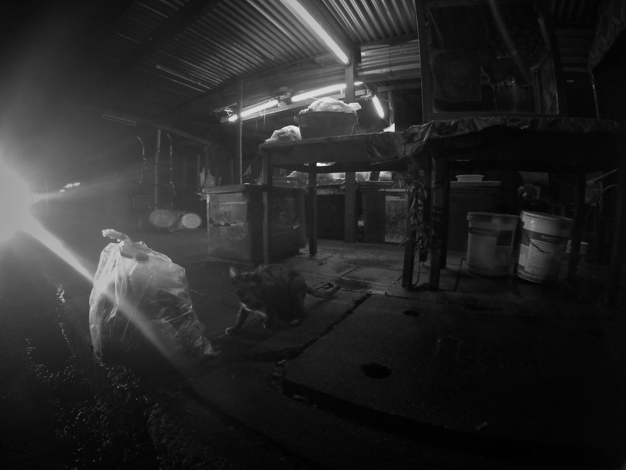 Indoors  No People Day Bangkok Thailand. Silom Dangerous Cats Trash Streetphotography Black And White Photography GoPrography