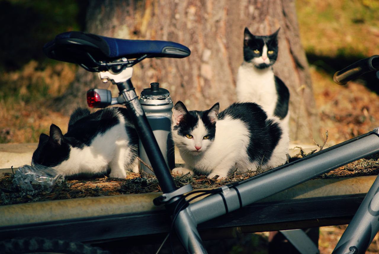 domestic cat, animal themes, pets, cat, domestic animals, mammal, feline, no people, day, outdoors, sitting