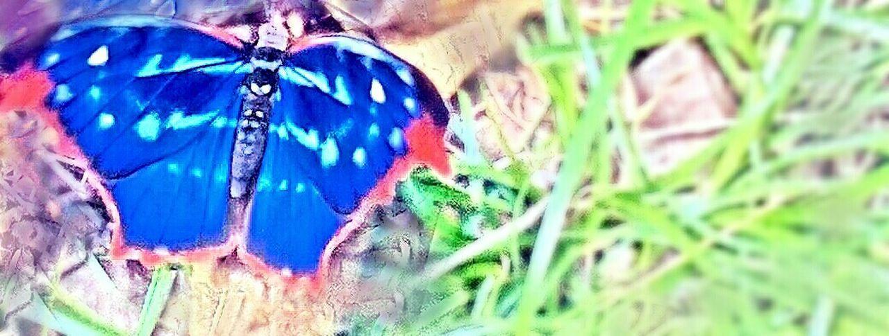 Enjoying Life Butterfly Closer Photografie Mariposa Misionera
