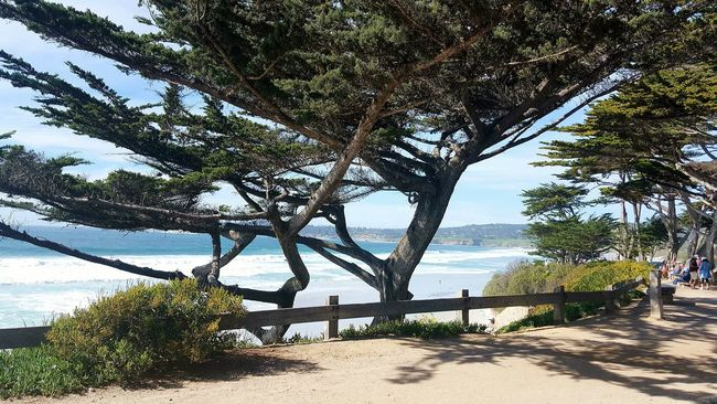 Pacific Ocean Pacific Coast Ocean View Trees Tranquility My Perspective Myhappyplace Naturelovers Beautiful Beautiful Nature Livelaughlove♡