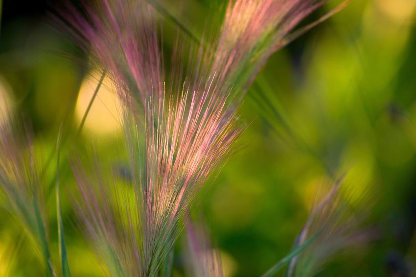 Growth Nature Plant Close-up Green Color Beauty In Nature Outdoors Agriculture Flower Ear Of Wheat Cereal Plant Freshness Selective Focus EyeEm Best Shots EyeEm Masterclass EyeEm Nature Lover Macro Photography Beauty In Nature