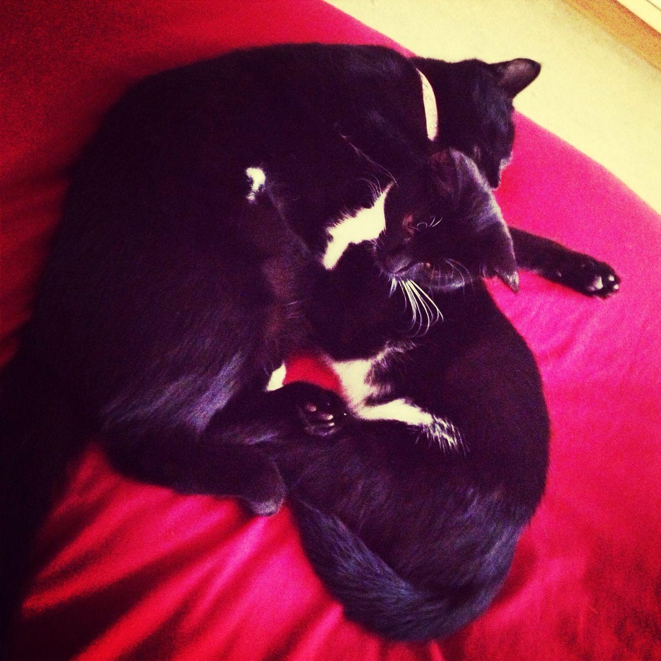 Sleeping Tired Cute Pets Beauty