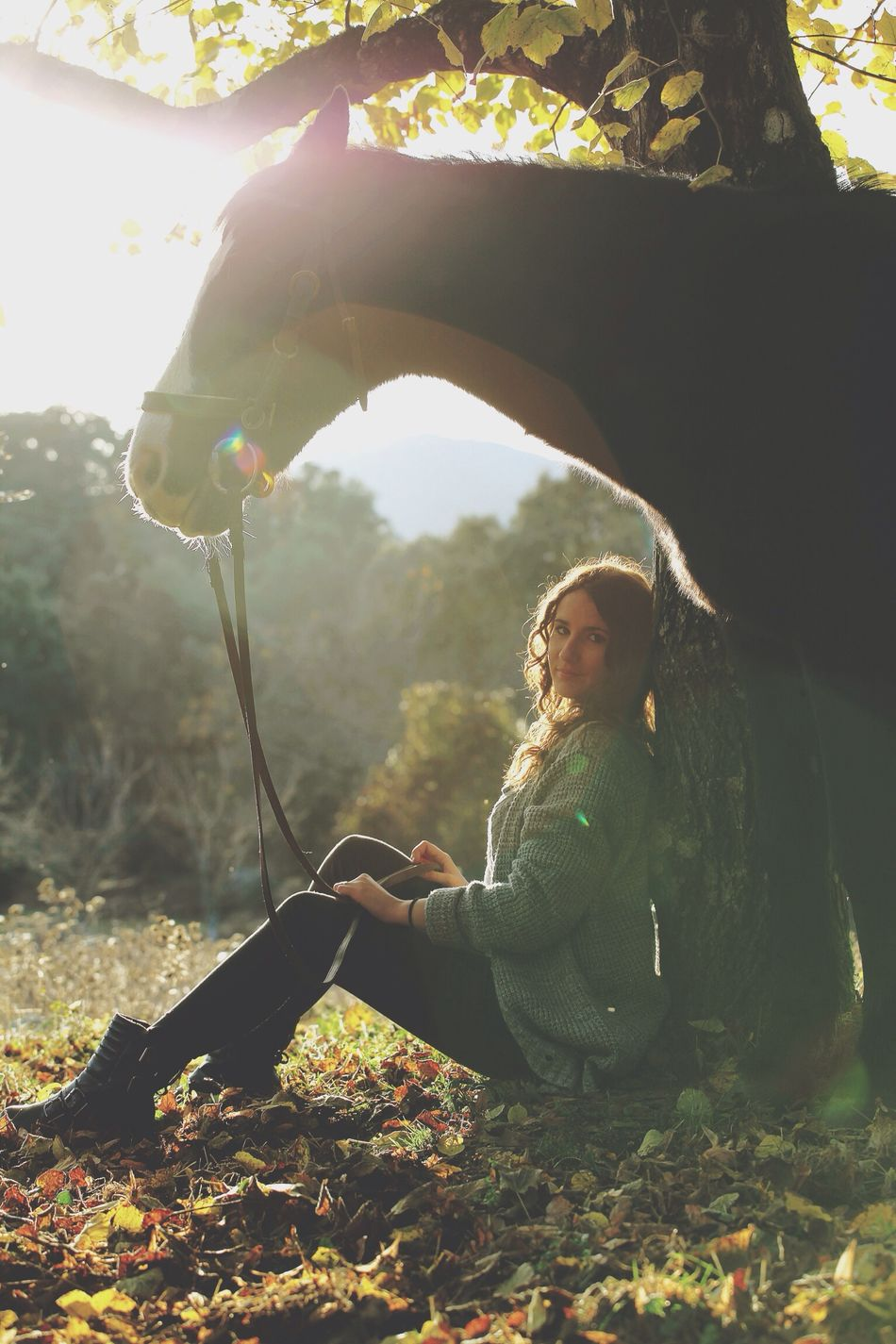 Horse Model Automn Beautiful