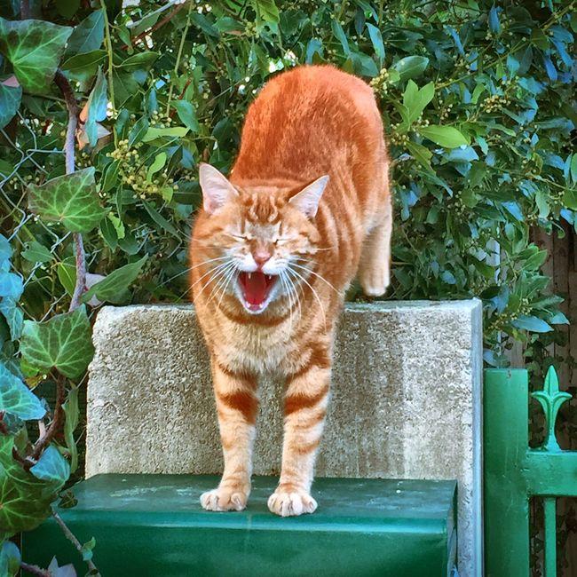 Showcase: March Chat Cat Catfie CHATFIE