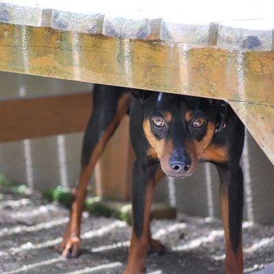 Dog Pet Shade