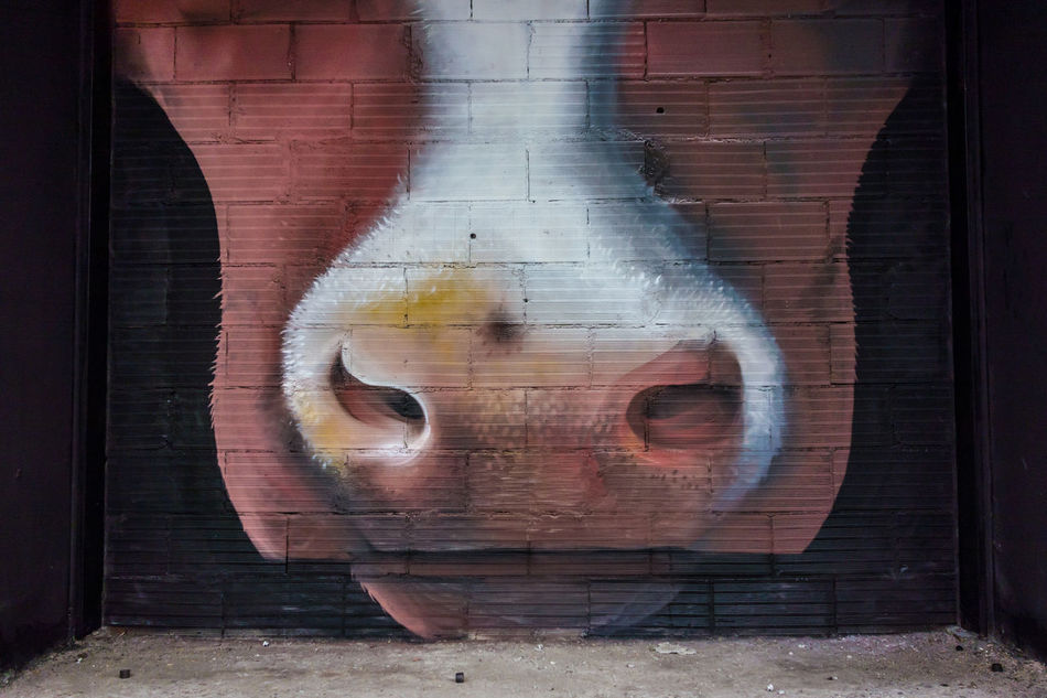 Animal Animal Mouth Architecture Brick Wall Building Exterior Built Structure Close-up Corrugated Iron Cow Cows Day Graffiti Kuh Mouth Mucca No People Outdoors Painting Spray Paint Street Art/Graffiti Wall Art Weathered