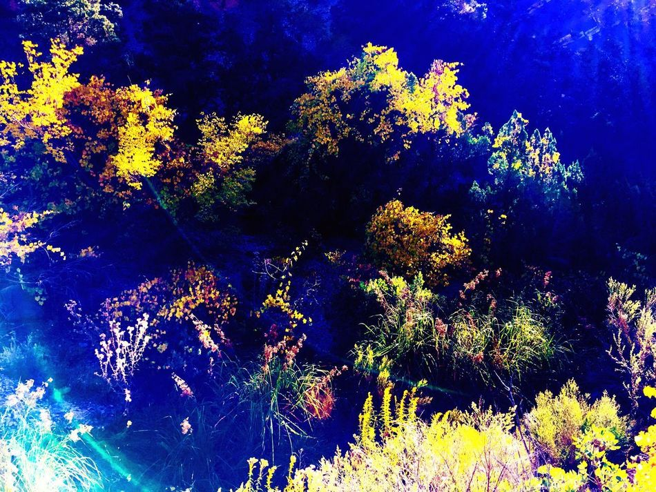 Lighting, Color, Depth. Lighting My Life In Living Colour Digging For Depth Yellow World