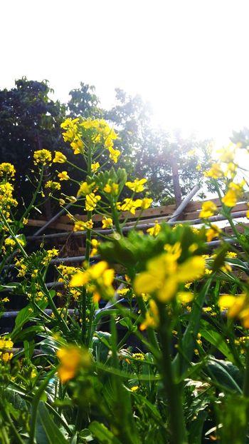 Zhuhai, China Yellow Flower Sunshine Tree No People Day Freshness