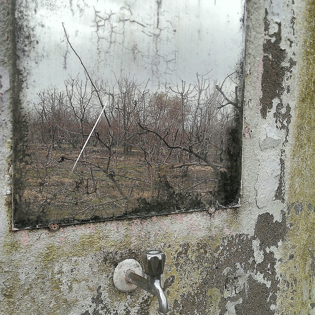 Reflection Of Bare Trees On Mirror