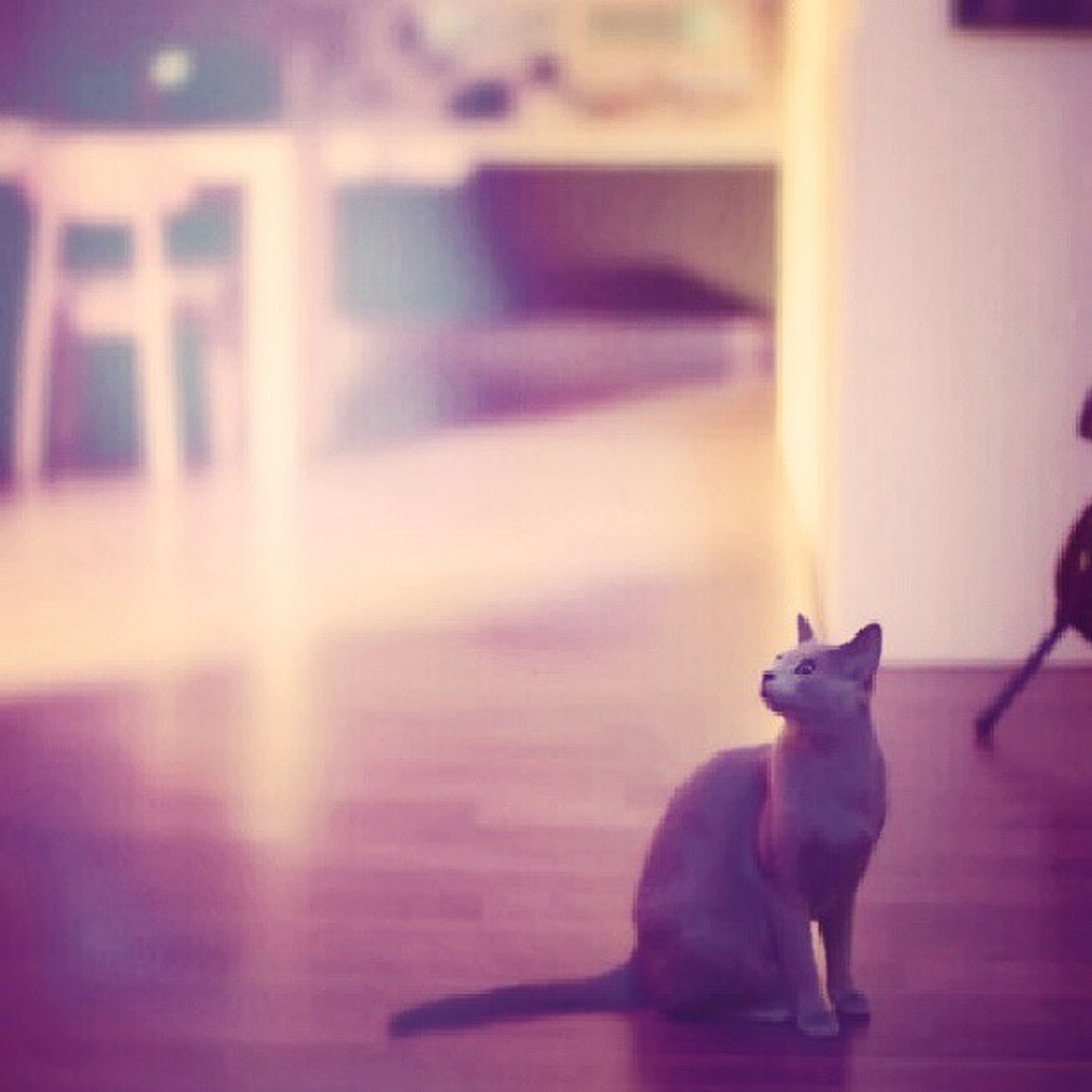 animal themes, one animal, domestic animals, pets, dog, indoors, mammal, sunlight, lens flare, no people, selective focus, sunbeam, built structure, side view, focus on foreground, home interior, sitting, domestic cat, architecture, house
