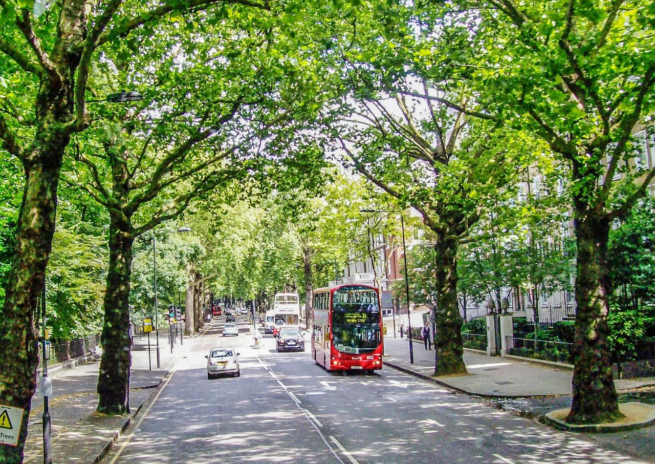 Double Decker Double Decker Bus Green Trees London London Bus Street Summer Traffic