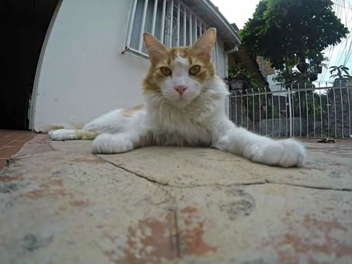 Cat Friend Soleil Cats And Dogs Animals Catportrait GoPrography Goprouniverse Goprophotography Gopro Shots Goprohero4 Gopro Colombia Portrait Portrait Of A Friend Portraitofanimal Portraitofanoldfriend