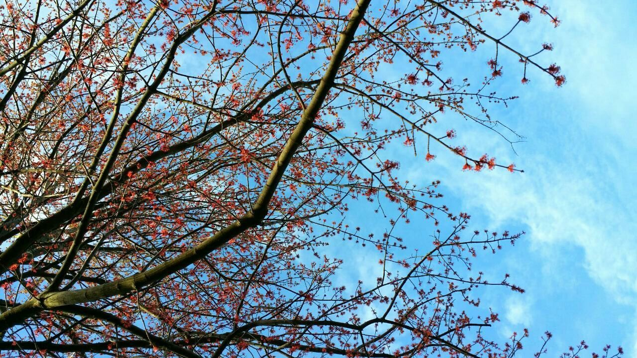 branch, tree, growth, low angle view, sky, nature, beauty in nature, flower, day, outdoors, no people, blossom, blue, springtime, freshness, fragility