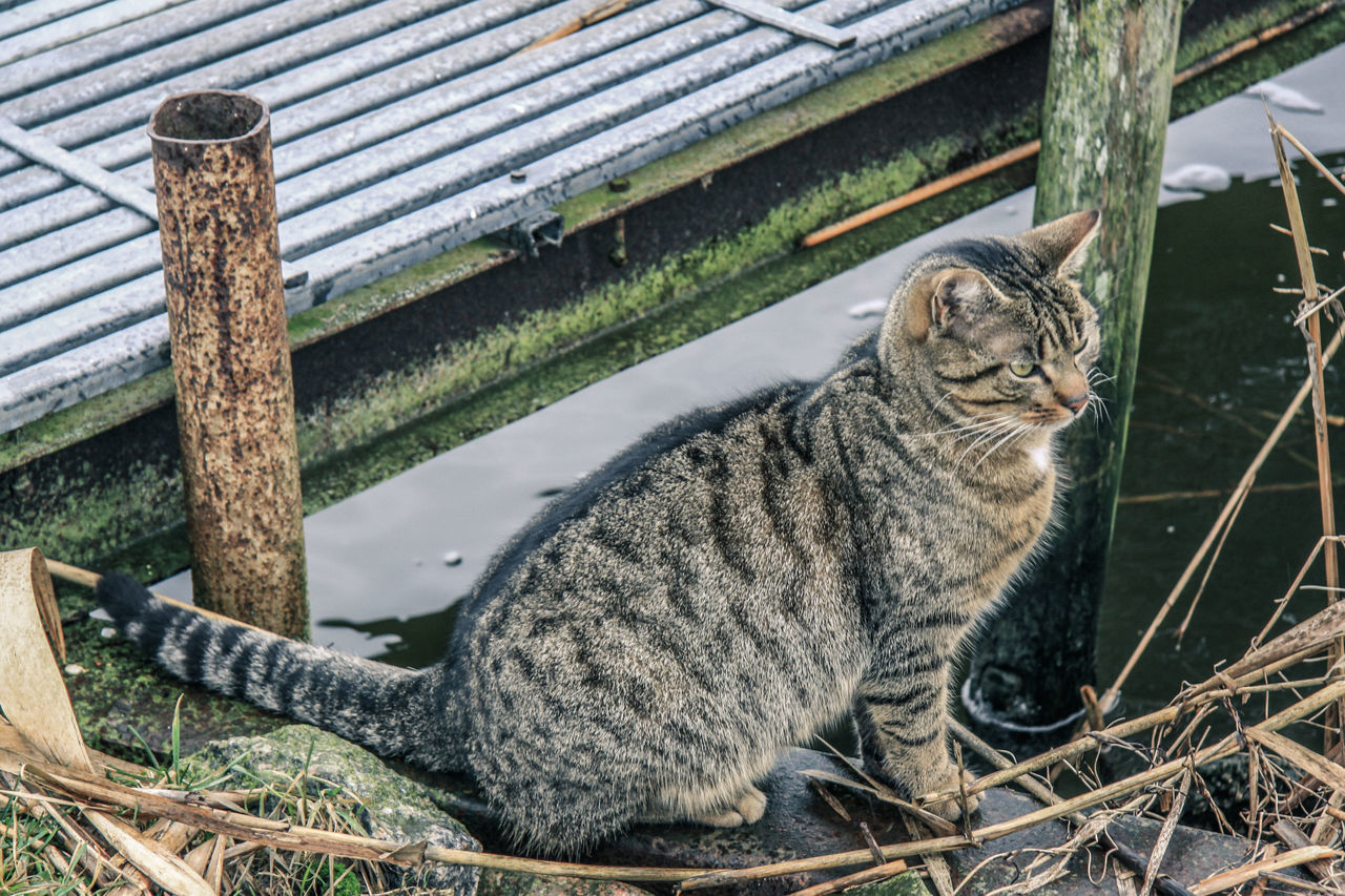 Animal Themes Bridge Close-up Day Domestic Animals Domestic Cat Feline Mammal Nature No People One Animal Outdoors Water